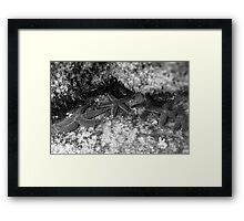 Sea Star Colony Framed Print