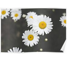 Flowers Galore Poster