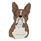 Tan Boston Terrier by rmcbuckeye