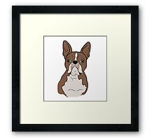 Tan Boston Terrier Framed Print