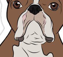 Tan Boston Terrier Sticker