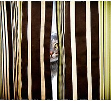 I see you by Lynn Starner