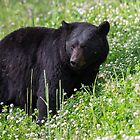 Bear in Deep Clover by Ken McElroy