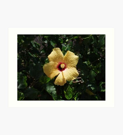 Lanzarote Bloom Art Print