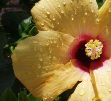 Lanzarote Bloom Sticker