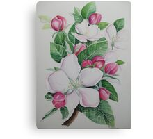 Apple blossom flower floral spring flowers Canvas Print