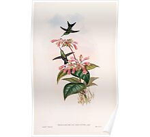 A monograph of the Trochilidæ or family of humming birds by John Gould 1861 V5 312 Poster
