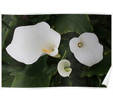 White Lilies II Poster