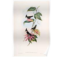 A monograph of the Trochilidæ or family of humming birds by John Gould 1861 V4 022 Poster