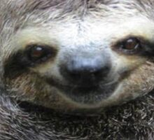 Smiling Sloth Sticker