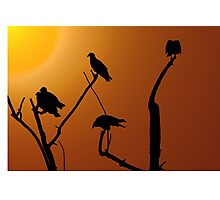Vulture Roost Photographic Print