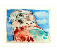 Brown Falcon Art Print