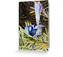 Superb Fairy Wren 2 Greeting Card