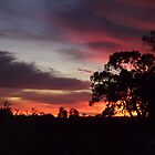 Sunset Silhouettes by sharon wingard