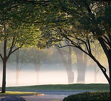 morning fog 1 by sgduke