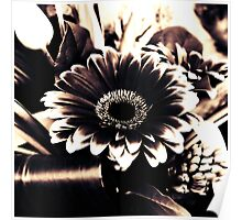 Gerber Flower Arrangement in Black & White Poster