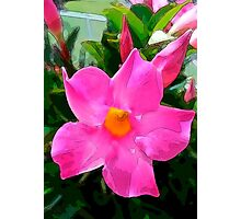Pretty in Pink Dipladenia Photographic Print