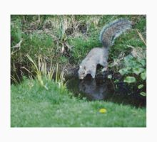 Grey Squirrel drinking Kids Tee