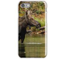 Female Moose at Fishercap Lake No. 1 iPhone Case/Skin