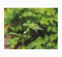 Astrantia Garden Flower Kids Tee