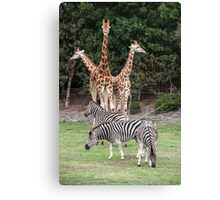 Animal Kingdom II Canvas Print