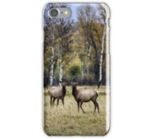 Cow Elks in a Field in Fall - Grand Tetons iPhone Case/Skin