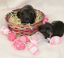 Easter Basket of Guinea Pigs - Ebony & Jet by AnnDixon