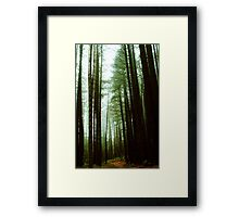 Sugar Pine Walk Framed Print