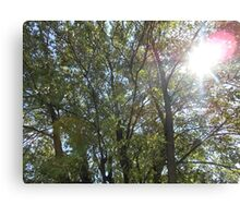 A great view of the Trees looking up Canvas Print