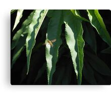 insect up close Canvas Print