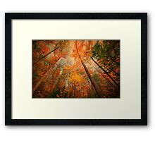 tall trees Framed Print