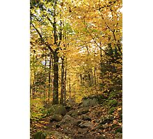 Fall colors over the Zealand Falls Trail, White Mountain National Forest, New Hampshire Photographic Print