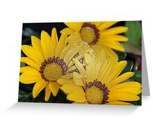 Yellow African Daisy Greeting Card