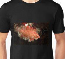 Cryptic Wrasse, Wakatobi National Park, Indonesia Unisex T-Shirt