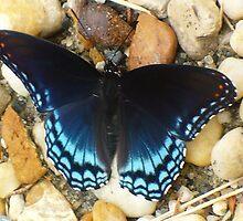 Blue Fella by RolandArnold