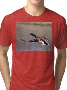 Mallard in Flight Tri-blend T-Shirt