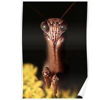 Praying Mantis Portrait Poster