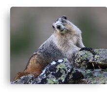Alaska Marmot Portrait Canvas Print