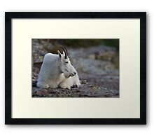 Mountain Goat Watching the Sunset Framed Print