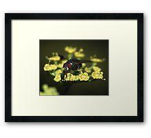 Fly & Pollen Framed Print