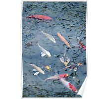 Colorful Koi Fish Poster