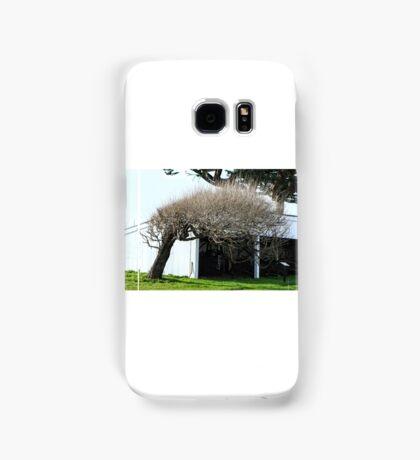 Old Cypress Samsung Galaxy Case/Skin