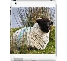 FAVORITE SHEEP IN IRELAND iPad Case/Skin