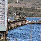 Pier II by Laurie Puglia