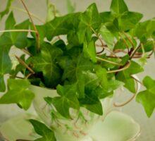 Tea Cup Ivy Sticker