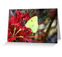 Yellow Butterfly  on a Red Spider Lily Greeting Card