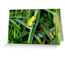 Little Green Frog on a Weed Greeting Card