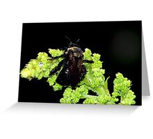 Bumblebee in the Rain Greeting Card