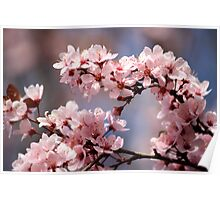Pink Plum Blossoms Poster
