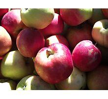 Harvest Apples Photographic Print
